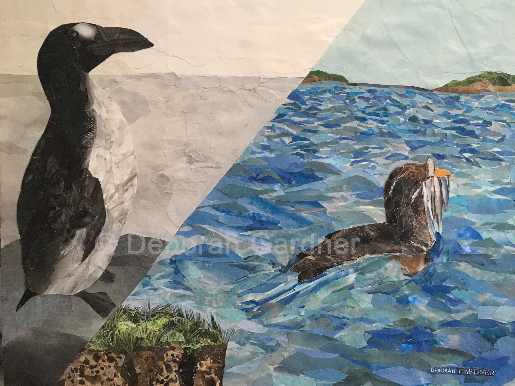 Image of a collage representing a black-and-white Great Auk on the left, and a color Rhinoceros Auklet on the right, divided by a diagonal line