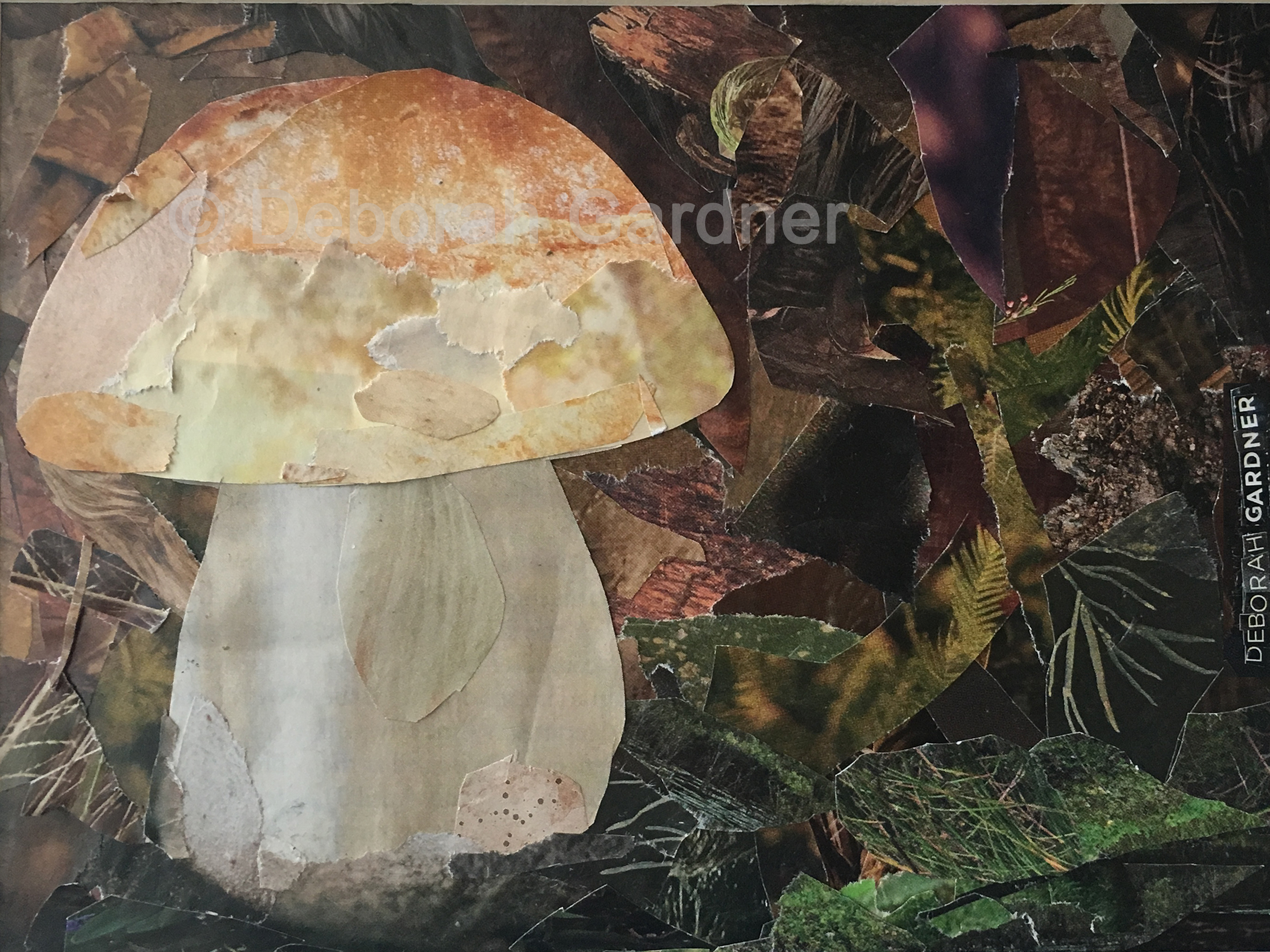 Image of a collage depicting a porcini mushroom.