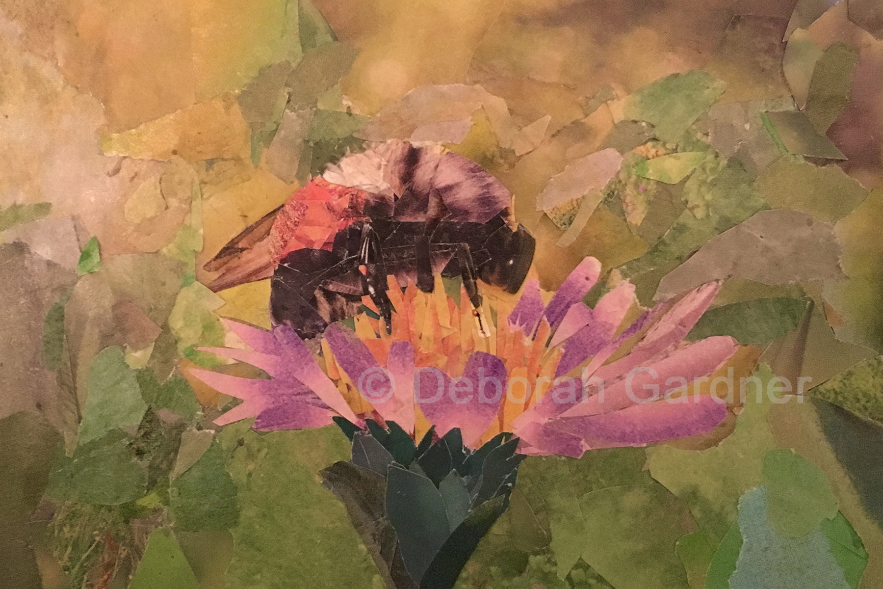 Picture of a collage image representing a bee on a purple wildflower