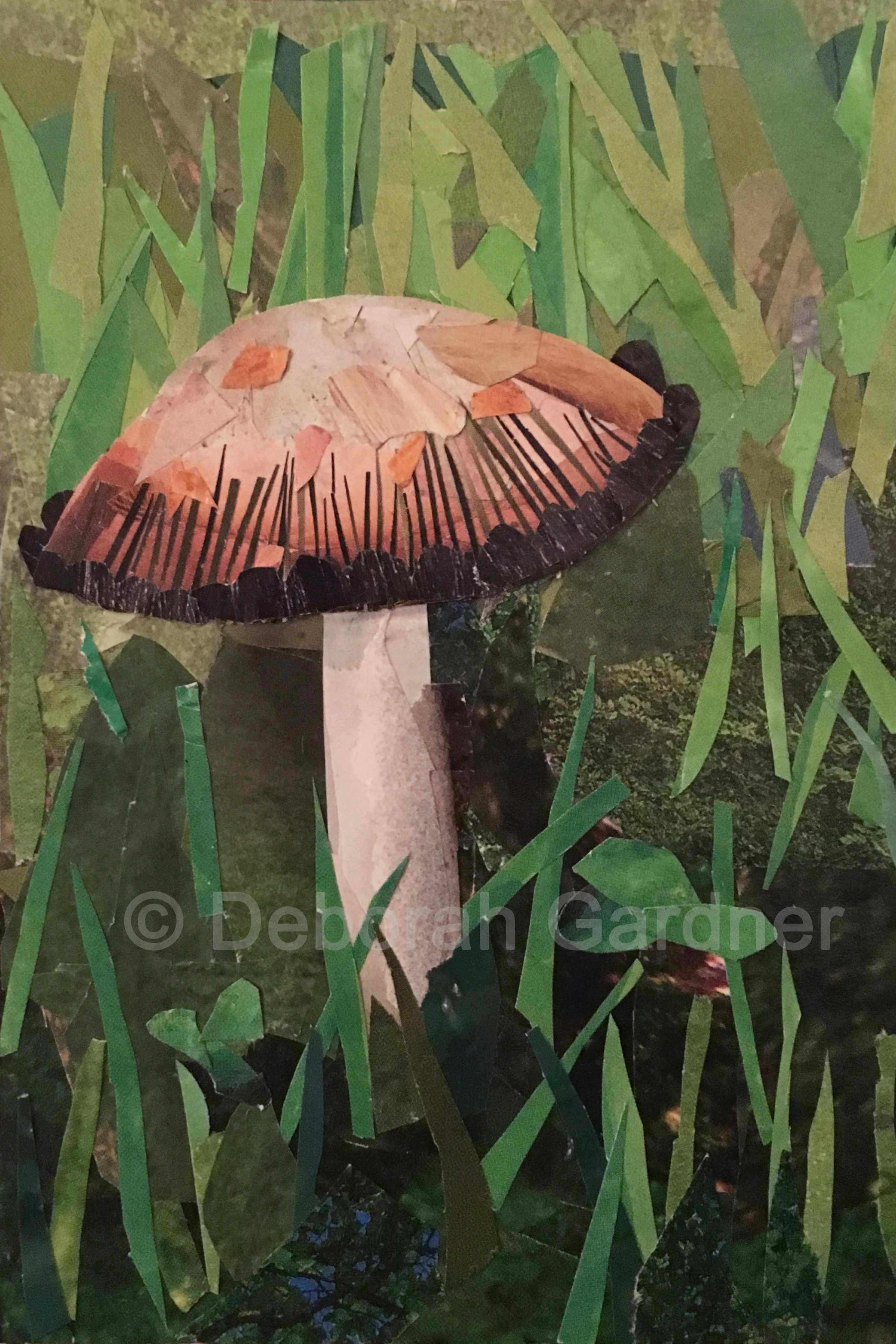 Image of a collage representing a wild mushroom (shaggy mane).