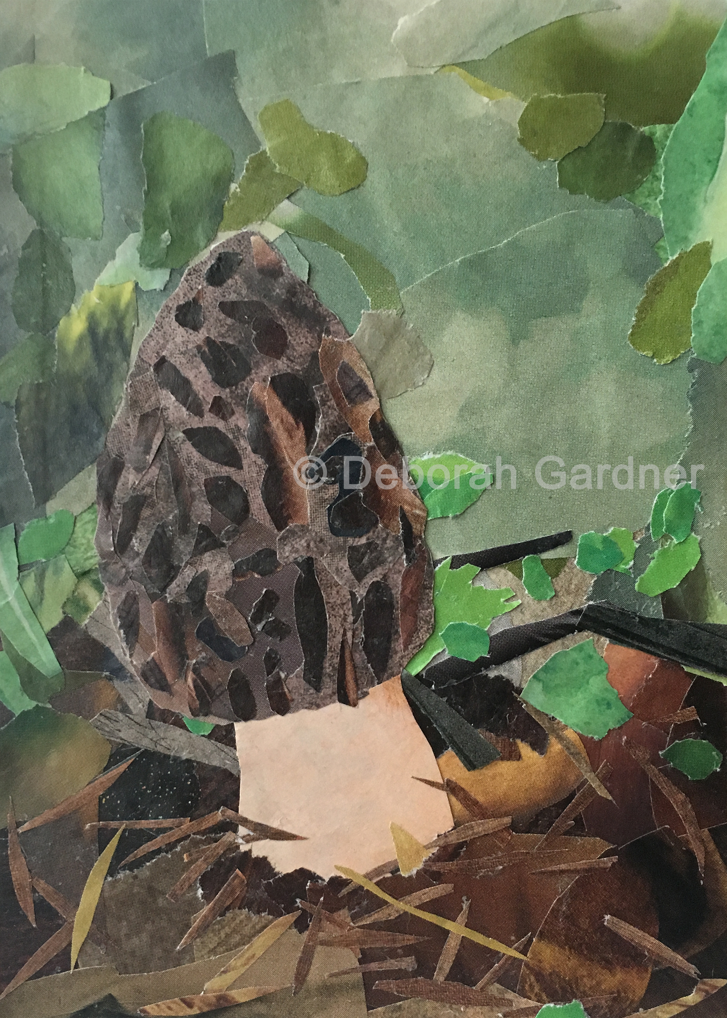 Picture of a collage representing a morel mushroom.